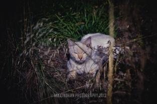 ©Maxi Kohan Fotografía-38